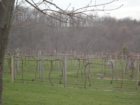 Galena Cellars Winery & Vineyard: Vines