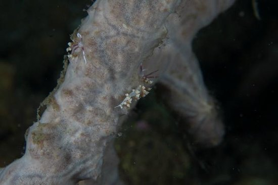 Eco Divers Resort Lembeh: Diving was amazing with critters as tiny as a grain of sand