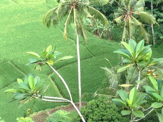 Villa Indah Ubud: Awesome view from verandah