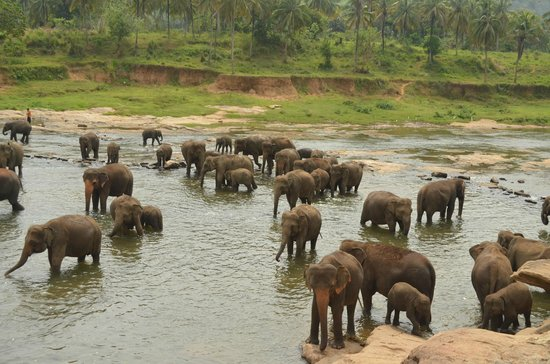 Elephant Car Rental Uk