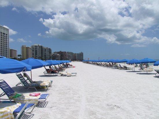 Hilton Marco Island Beach Resort: Pure white beach the hotel is on