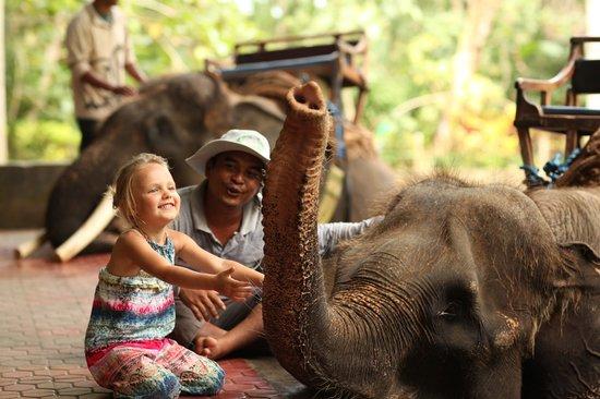 Kebun Impian: Safari)