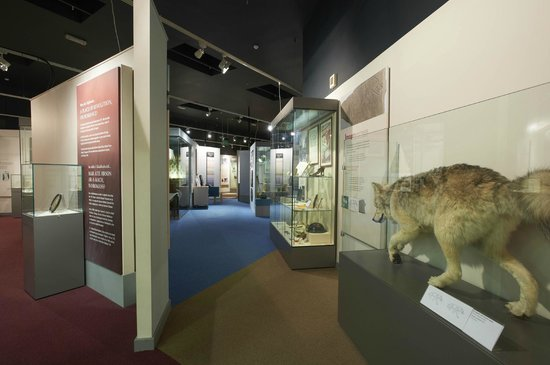 Inverness Museum and Art Gallery : Upstairs Gallery