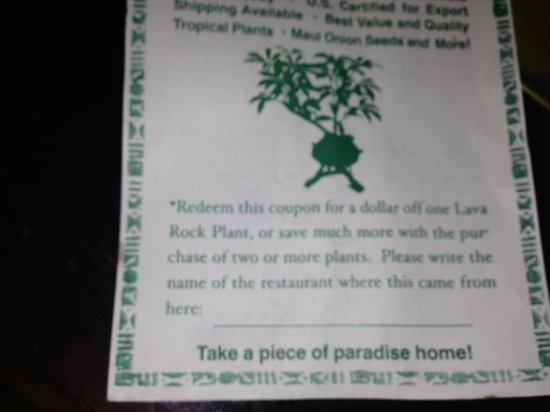 Stella Blues Cafe: Plant for sale on the table