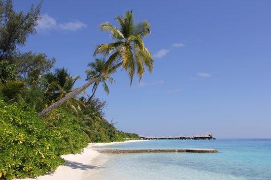 Coco Bodu Hithi: Plage Island Villa 310 à 320