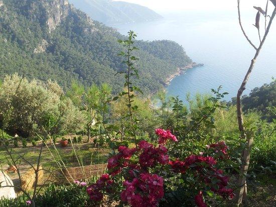 Lissiya Hotel : Otelden manzara