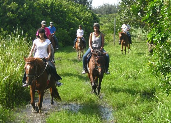 """Horseback Beach Rides: Going through the natural wetlands (what some people mistakingly call the """"Sewer"""")"""