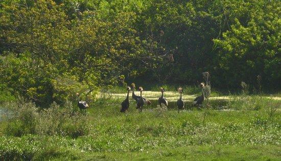 Horseback Beach Adventures: Crowned Cranes