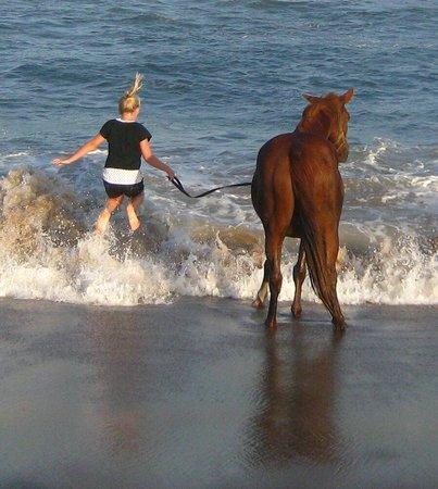 Horseback Beach Adventures: Little girl enjoying swimming with her horse