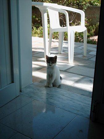 Tsambika's Studios: This little kitten always visited us