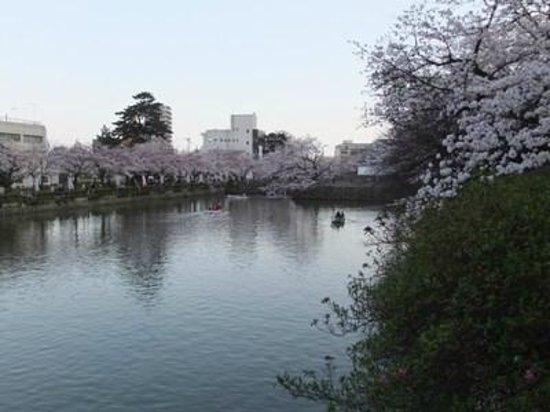 Odawara Castle Park: 小田原城址公園04