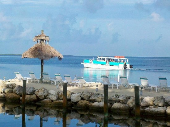 Amoray Dive Resort: Morning dive boat heading out