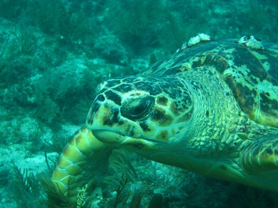 Amoray Dive Resort: Wildlife on Molasses Reef