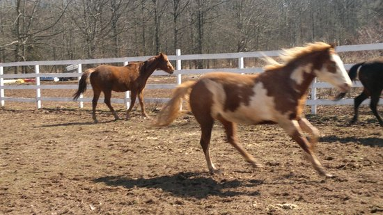 The Kaaterskill: Horses