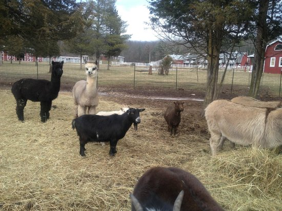 The Kaaterskill: Farm animals