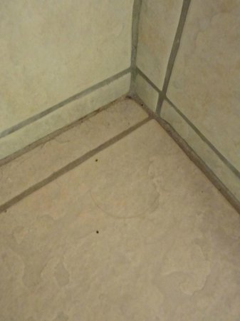 Ramkota Hotel: Hair and dirt on bathroom floor