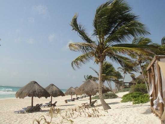 Om Tulum Hotel Cabanas and Beach Club: vista a la derecha desde las hamacas