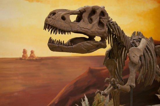 Gournes, Grekland: T-Rex Fossils