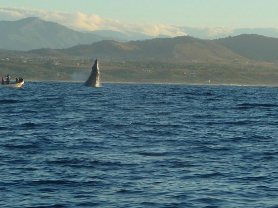 Puerto Escondido Fishing : A humpback breaching on our way out to fish
