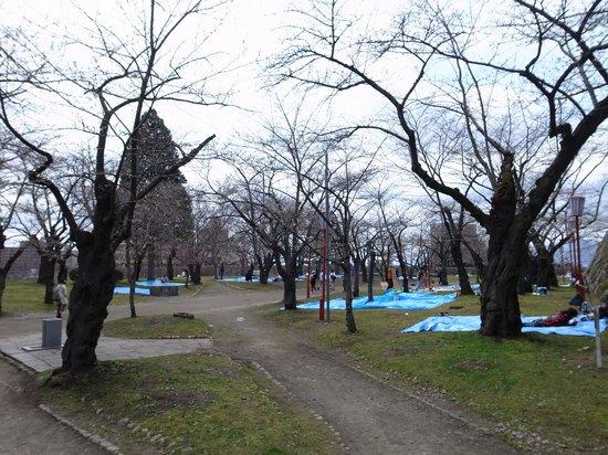 Iwate Park (Koen): ブルーシートに蕾がいっぱい