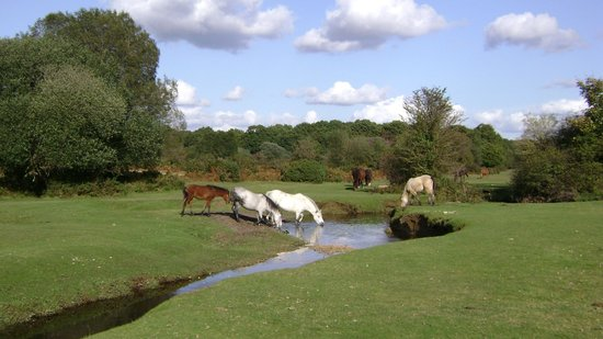 Forest Leisure Cycling: beautiful Burley Lawn