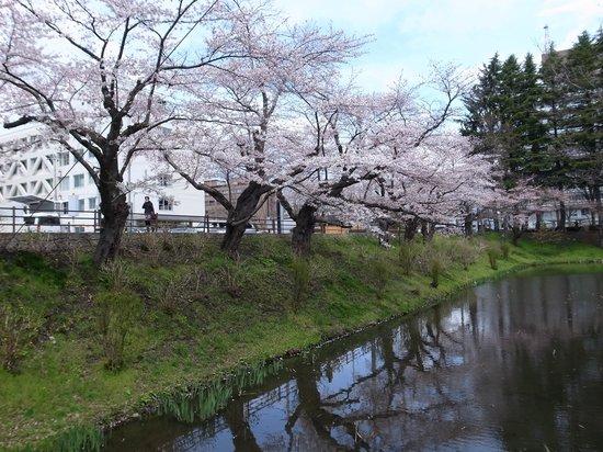 Morioka Castle Ruins : 亀ケ池。お堀の名残。唯一桜が咲いてた