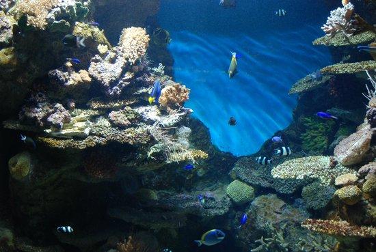 2 picture of l aquarium de barcelona barcelona for Aquarium de barcelona