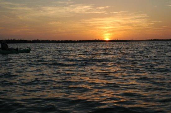 Up a Creek Kayak Tours : Sunset Rookery Bay
