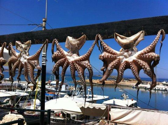 هوتل داناوس: fresh octopus
