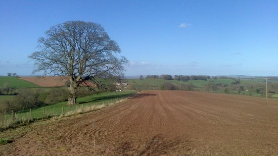 Best Western Exeter Lord Haldon Country Hotel: Open fields to the front