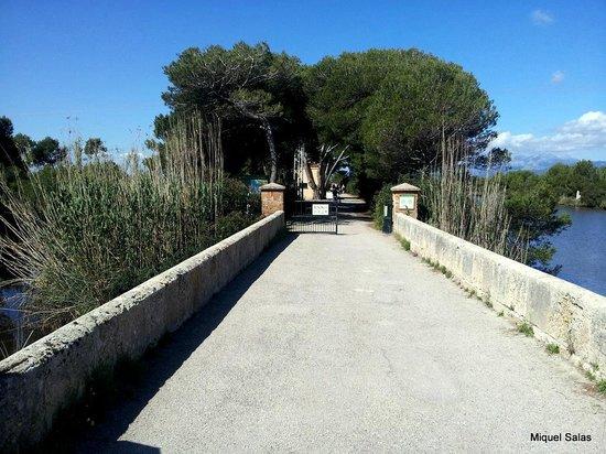 Parque natural s'Albufera de Mallorca: Entrega del parque, aqui solo a pie o en bicicleta para entrar