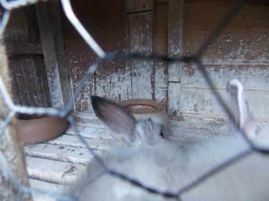 Fazenda Lenz: Animais mutilados (sem orelha) em ambiente extremamente sujo, paredes cheia de urina