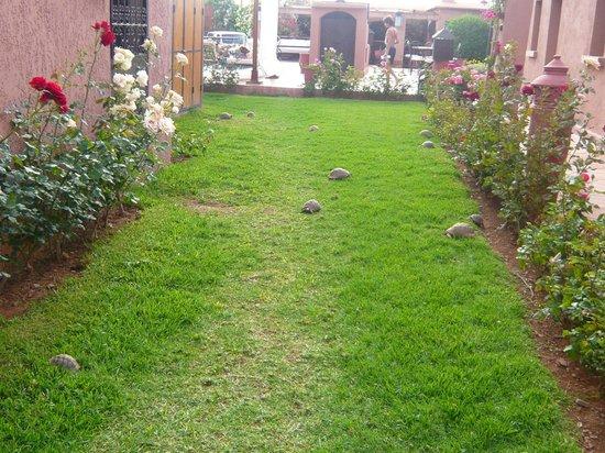 Villa Tata Marie : tortues