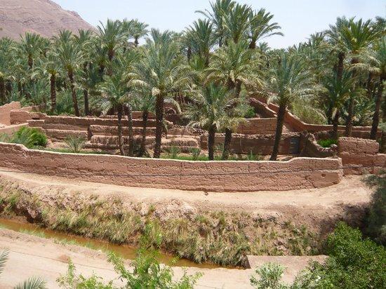 Dar Nekhla : vue de la palmeraie de la terrasse