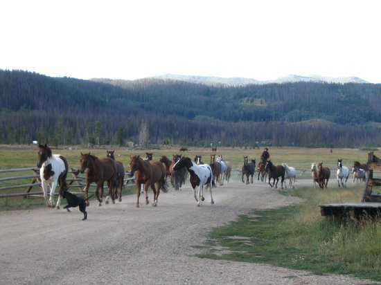 ‪‪Vista Verde Guest Ranch‬: Bringing in the horses each morning‬