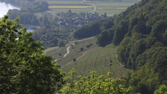 Weinbau Trutmann
