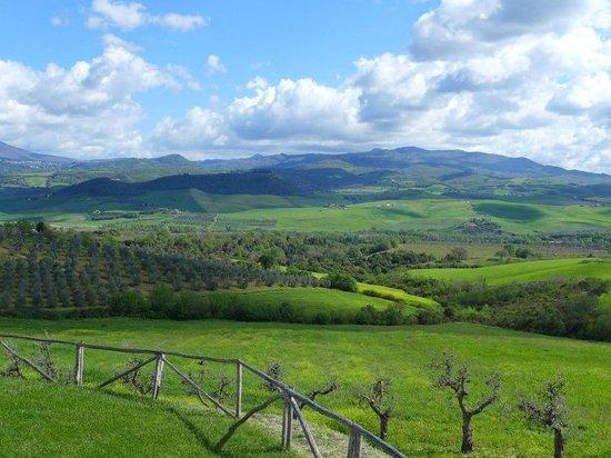 Agriturismo Il Poggione: Vineyard vistas