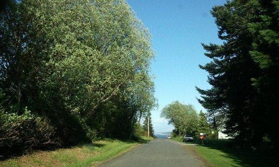 Huber's Inn Port Townsend: Lovely town trees.