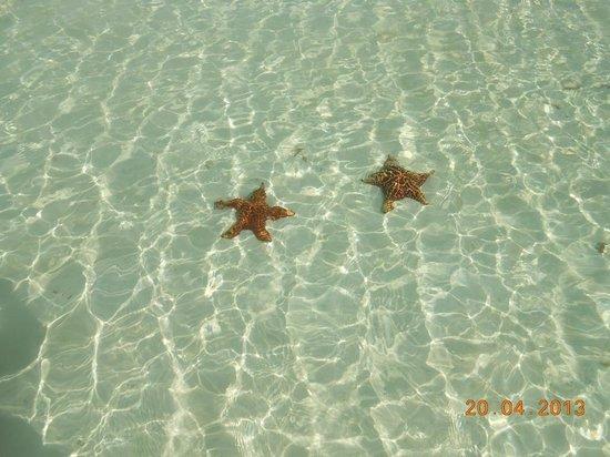 Iberostar Ensenachos: Nice clear water and starfish :)