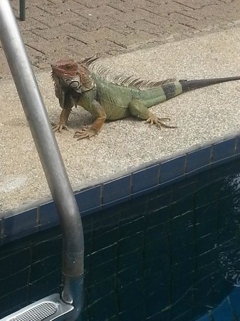 Copacabana Hotel & Suites: one of our iguana friends!