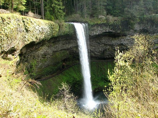 Silver Falls State Park照片