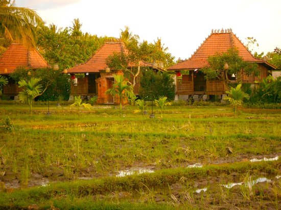 KajaNe Yangloni Private Boutique Health & Leisure Centre: View of some villas across the rice fields