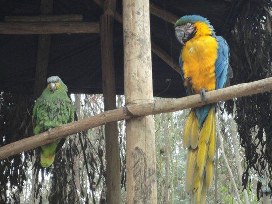 AMARU Bioparque Cuenca Zoologico
