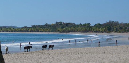 La Posada Bed & Breakfast: Playa Carrillo