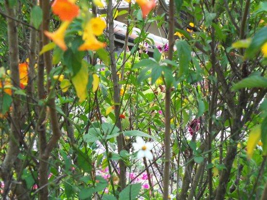 Tierra Viva Valle Sagrado Urubamba: Flores