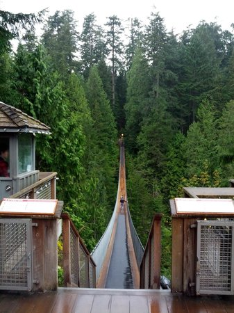 Capilano Suspension Bridge und Park: Bridge