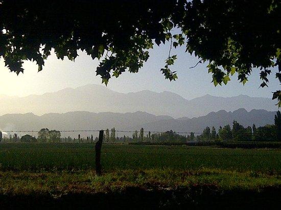 Mendoza Wine Bike Tour: Lujan de Cuyo