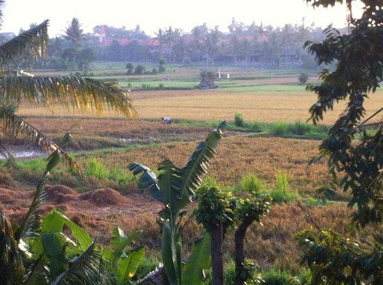 Alam Jiwa: Morning view