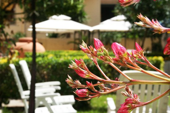 Solemare B&B - Apartments Alghero: The spring view...
