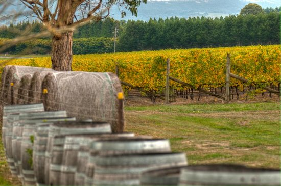 Wines Guys - Day Tours